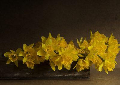 Daffodillus Narcissus