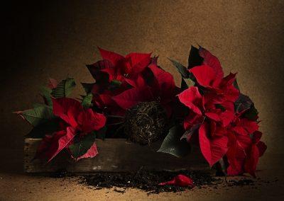 Kerstster 2