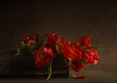 Tulipsfilters